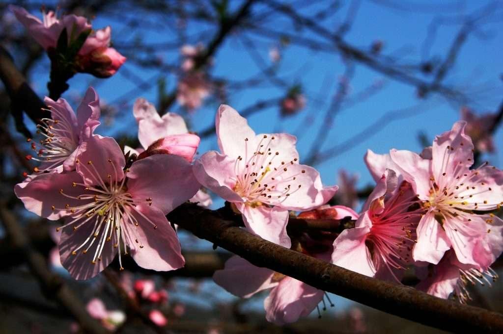 Flores de ciruelo · Tocando la flauta de hierro · Eihei Kōroku