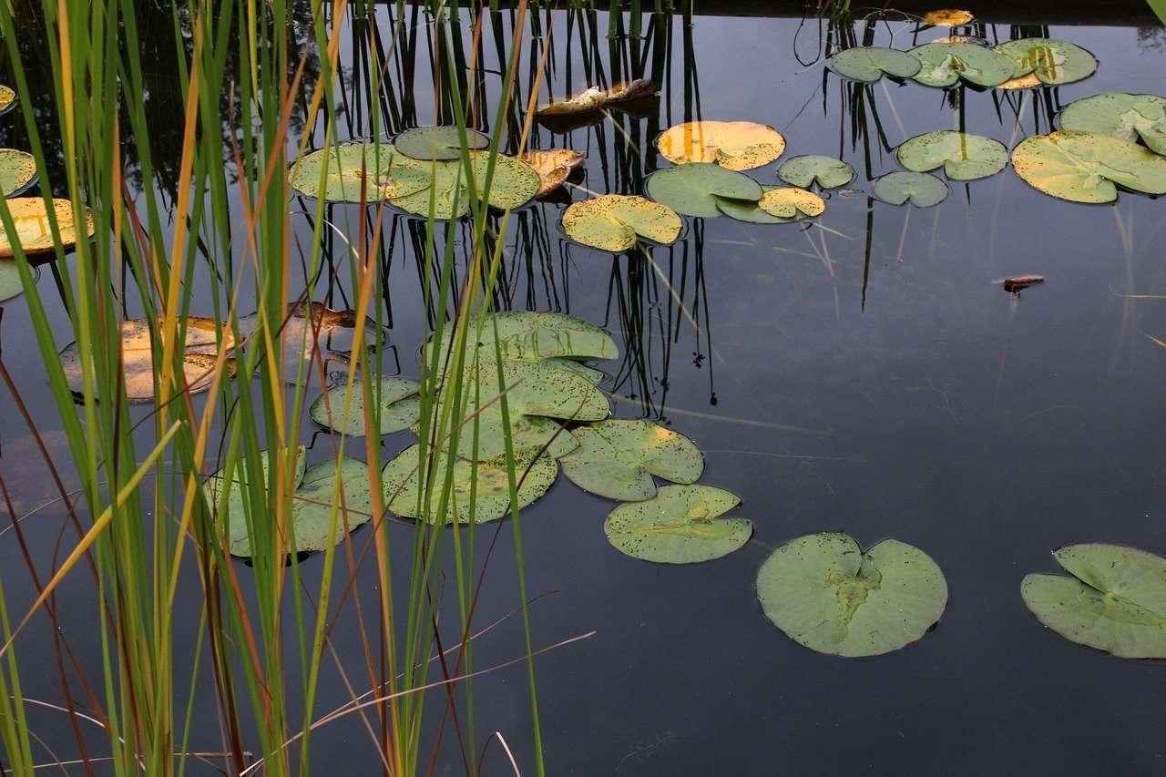 En el agua estancada se oculta un dragón