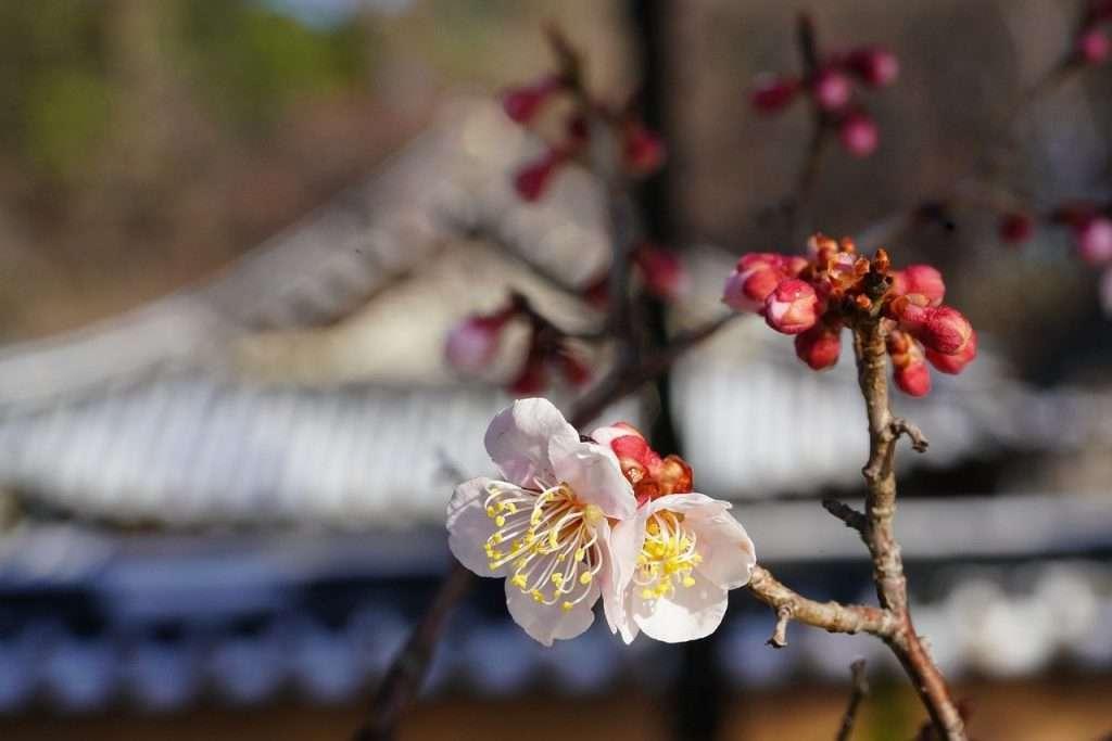 La maravillosa fragancia de la sabiduría y la virtud entre la nieve · Eihei Kōroku