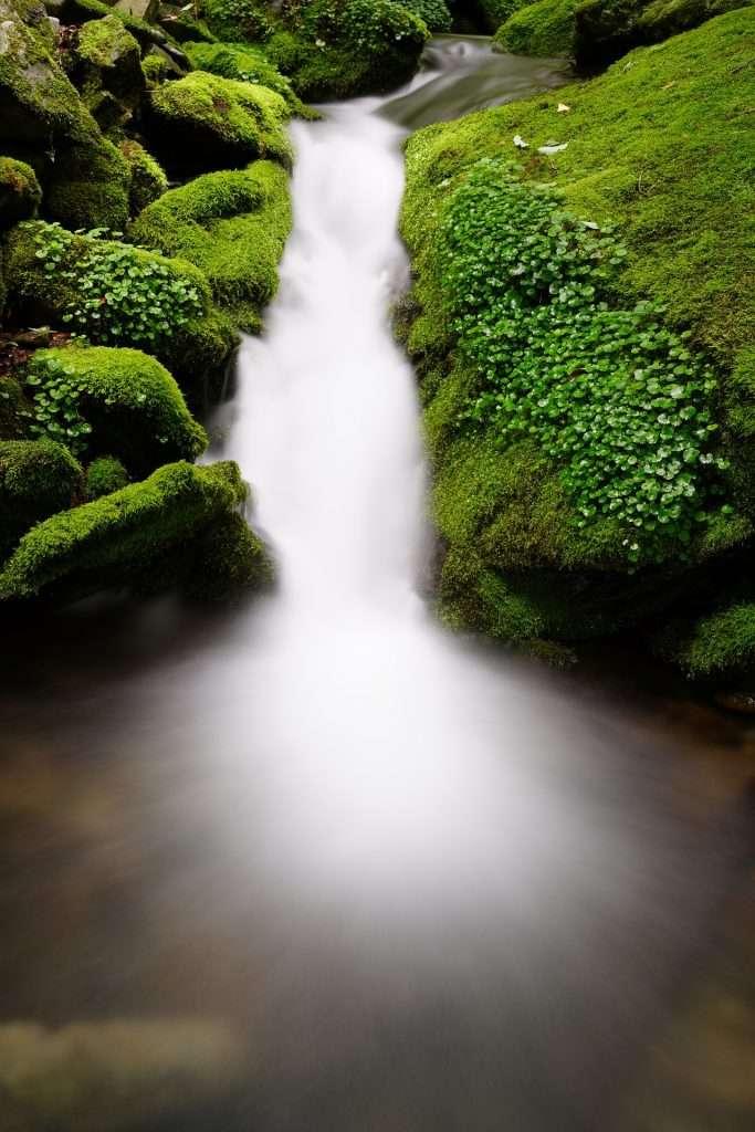 Un camino llano · Eihei Kōroku