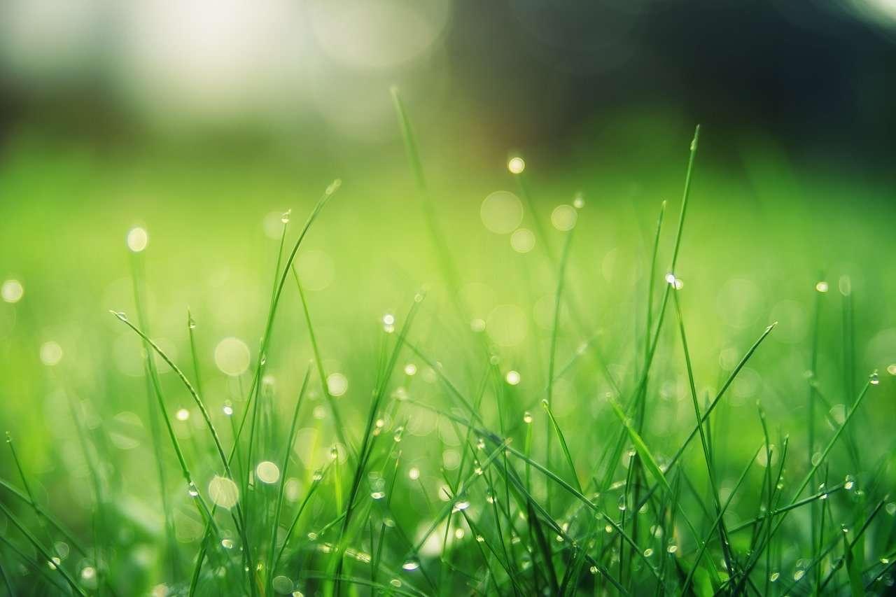 El cuidado de la miríada de puntas de hierba