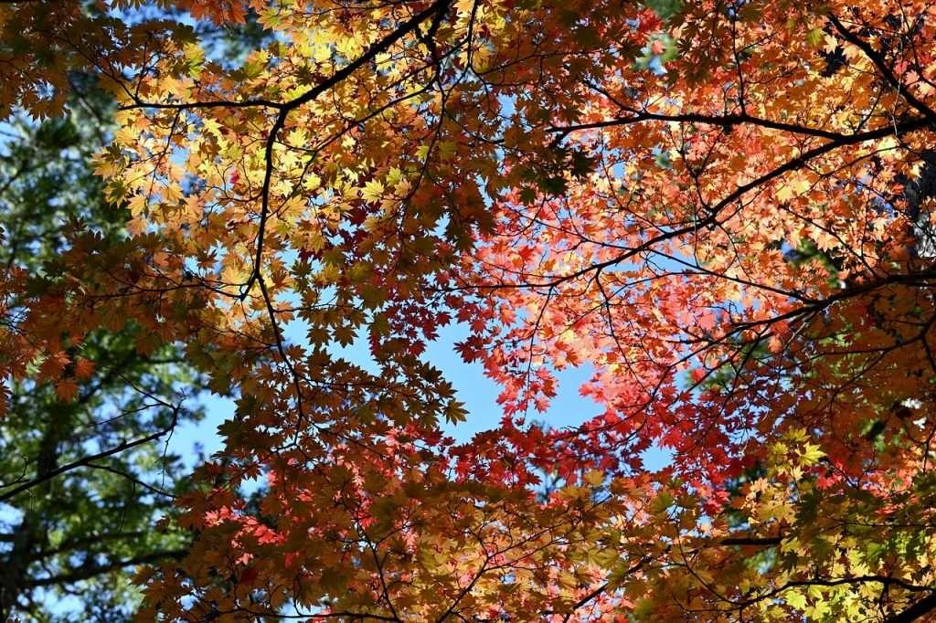 Repentinos colores otoñales · Eihei Kōroku