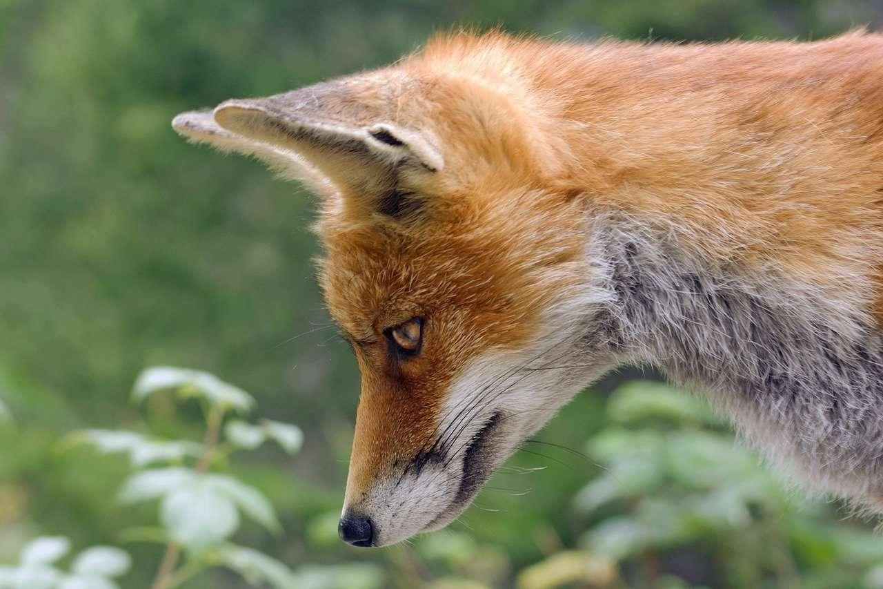 Un zorro despertado a la causalidad