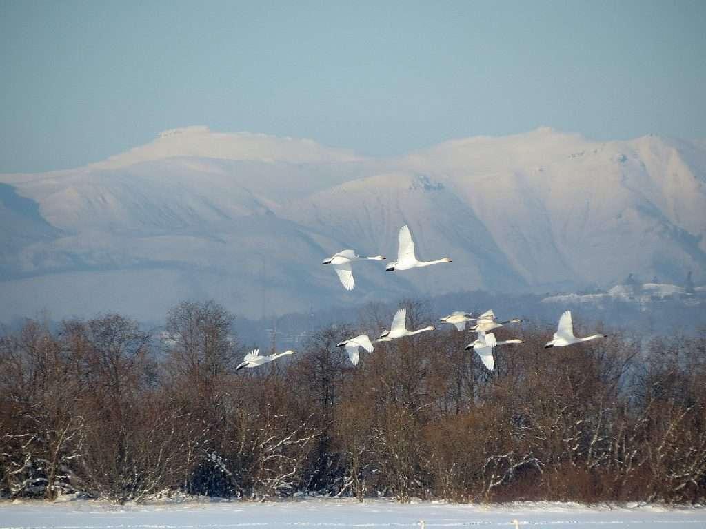 Escarcha añadida a la nieve · Eihei Kōroku