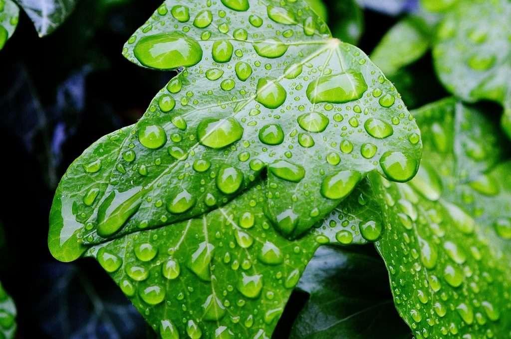 Las gotas de lluvia restantes · Eihei Kōroku