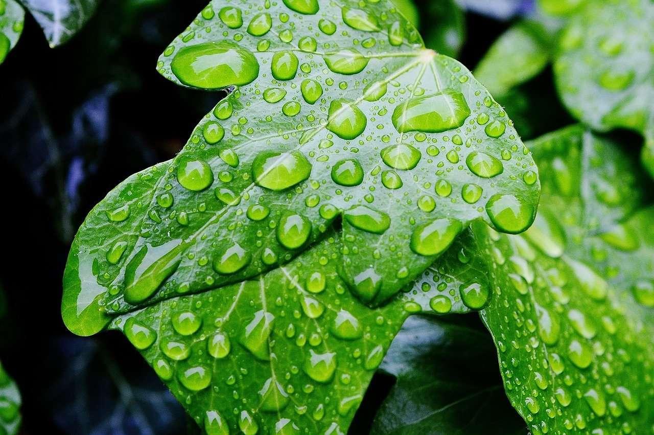 Las gotas de lluvia restantes